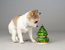 Surprised chihuahua puppy with toy christmas tree Stock Images