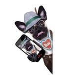 Surprised crazy bavarian dog Stock Photo