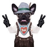 Surprised crazy bavarian dog. Silly crazy  pug dog dressed up as bavarian with gingerbread as collar, isolated on white background, and victory or peace fingers Stock Photos