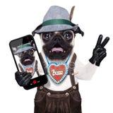 Surprised crazy bavarian dog Stock Image