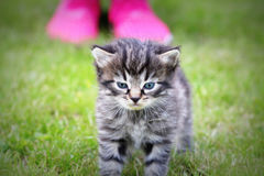 Surprised cute yuong cat looking at the new hostess. Grass background Royalty Free Stock Images