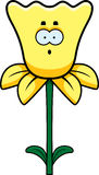 Surprised Daffodil Stock Photos