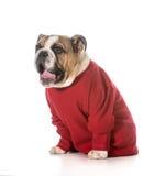 Surprised dog Stock Image