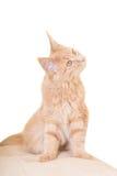 Surprised ginger cat Stock Photos