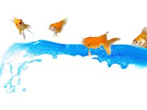 Surprised! Goldfishes having fun with water Royalty Free Stock Photos