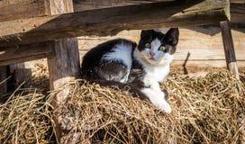 Surprised kitten Stock Photos