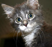 Surprised kitty. Adorable kitten caught by surprise Stock Images