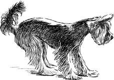 Surprised lap dog Stock Photos