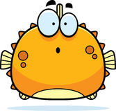Surprised Little Blowfish Stock Photography