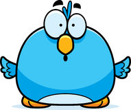 Surprised Little Bluebird Stock Photo
