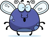 Surprised Little Fly Stock Photography