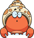 Surprised Little Hermit Crab Royalty Free Stock Images