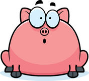 Surprised Little Pig Stock Images