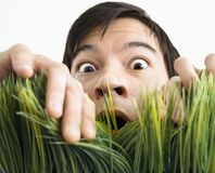 Surprised man behind grass. Royalty Free Stock Photo