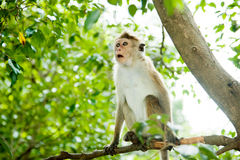 Surprised monkey Royalty Free Stock Photography