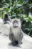 The Surprised  Monkey Royalty Free Stock Images