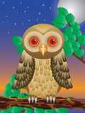 Surprised Owl. Sitting on branch in night, additional vector illustration