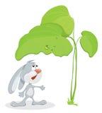 Surprised rabbit under leaf Stock Photo