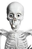 Surprised skeleton with open mouth Stock Photos