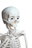 Surprised skeleton with open mouth Stock Photo