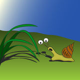 Surprised snail on the field looking at grass. Surprised snail on the field Stock Image