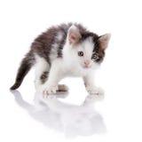The surprised spotty kitten. Stock Photos