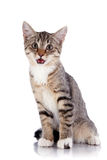 The surprised striped kitten. Stock Photography