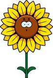 Surprised Sunflower Royalty Free Stock Photos
