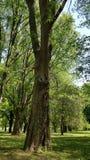 Surprised tree !! royalty free stock image