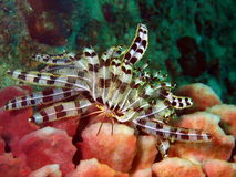 Sea lily of the Philippine sea Stock Photos