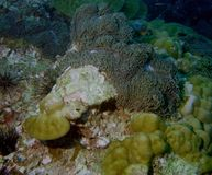 The surprising world of corals of Andaman sea 20 Royalty Free Stock Images