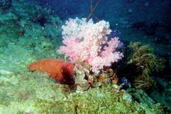 The surprising world of corals of Andaman sea 22 Royalty Free Stock Photo