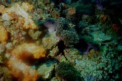 The surprising world of corals of Andaman sea 3 Stock Photo