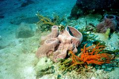 The surprising world of corals of Andaman sea 40 Stock Photo