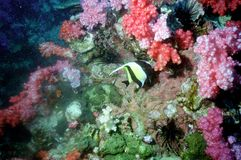 The surprising world of corals of Andaman sea 41 Stock Photos