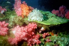 The surprising world of corals of Andaman sea 45 Royalty Free Stock Image