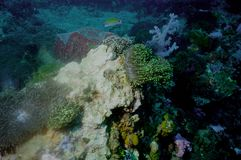 The surprising world of corals of Andaman sea 5 Royalty Free Stock Photo