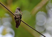Surr-fågel Arkivfoton