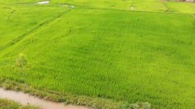 Surr skjutit sceniskt landskap för flyg- sikt av den åkerbruka lantgården på bygd lager videofilmer