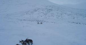 Surr som f?ngar videoen av tundran i Sibirien den fantastiska sikten av yurtsl?gret, hur folk som mycket bor i mitt av f?ltet av lager videofilmer