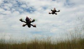 Surr som springer över det gröna fältet Royaltyfri Foto