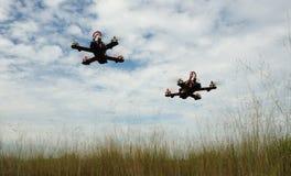 Surr som springer över det gröna fältet Arkivfoto