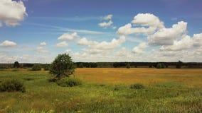 Surra att flyga lågt över frodig äng med träd Antennskott av det fridsamma soliga fältet Idylliskt sommarnaturlandskap 4K lager videofilmer