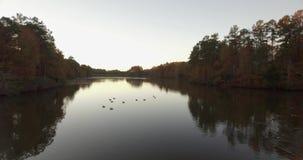 Surra den flyg- videoen av pittoreska änder på en sjö med reflexioner på vattnet lager videofilmer