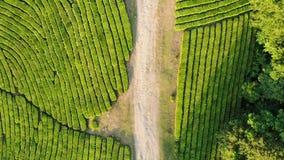 Surra skottet av den bästa sikten av vägen på koloni för grönt te stock video