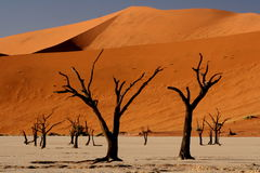 Surreal. Landscape of Dead Vlei Royalty Free Stock Images