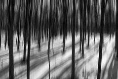 Surreal black and white forest Royalty Free Stock Photo