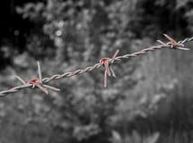 Surreal bloedig prikkeldraad op zwart-wit Stock Foto's