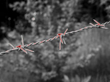 Surreal bloody barbed wire on black and white Stock Photos