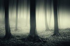 Surreal bos met mist op Halloween-nacht royalty-vrije stock foto's